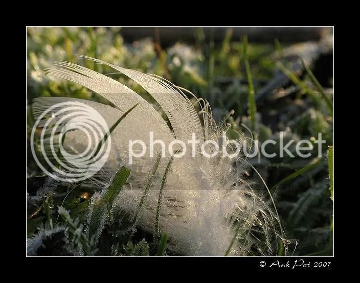 Log20-12-07-6.jpg