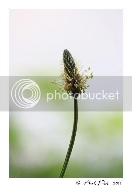 Log21-5-11-1.jpg