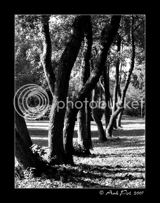 Log3-11-07-3.jpg