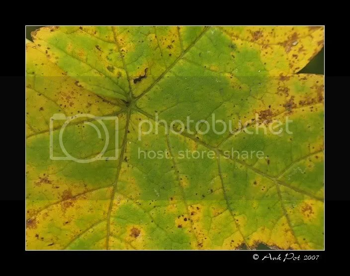 Log6-11-07-3.jpg