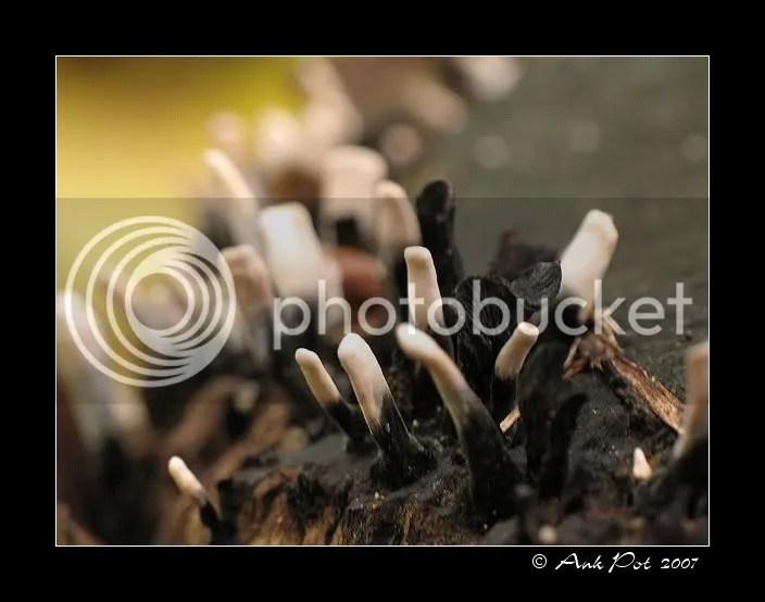 Log9-11-07-6.jpg