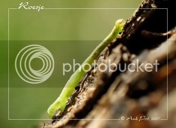 Log12-10-07-2.jpg