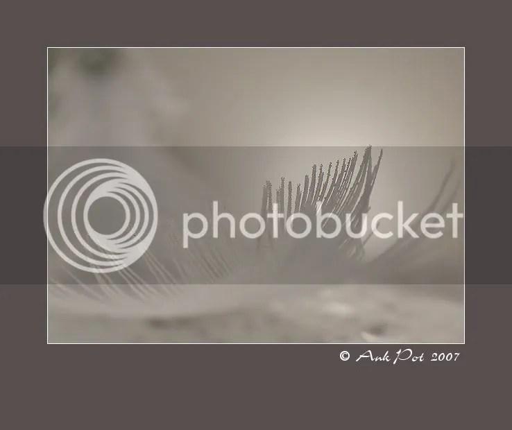 Log8-9-07-1.jpg
