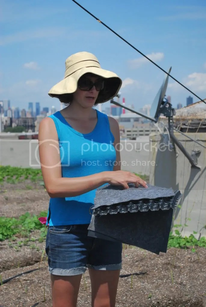greenroof,fieldtrip,BrooklynGrange