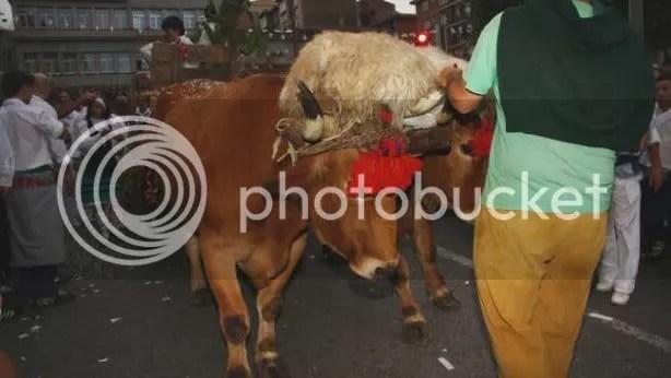 En el CAAB no queremos animales esclavos.