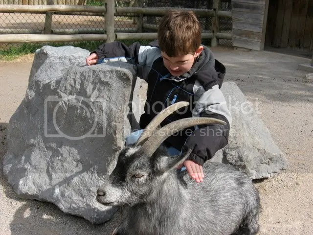 moments before that african pygmy goat gored him through the heart