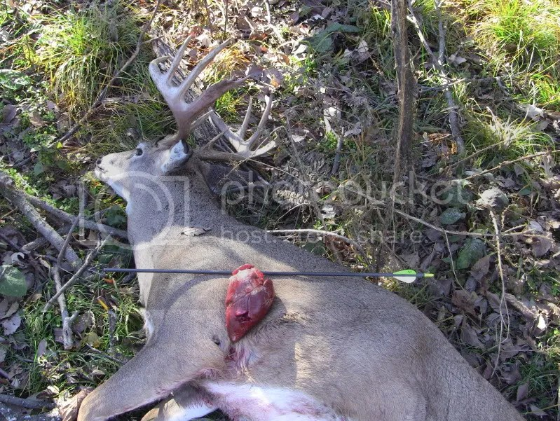 Deer Vs Human Heart Heart