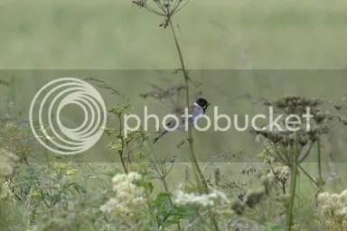 photo _DSC0183_zpsfmht2ijb_edit_1498942027346_zps48uv8m1q.jpg