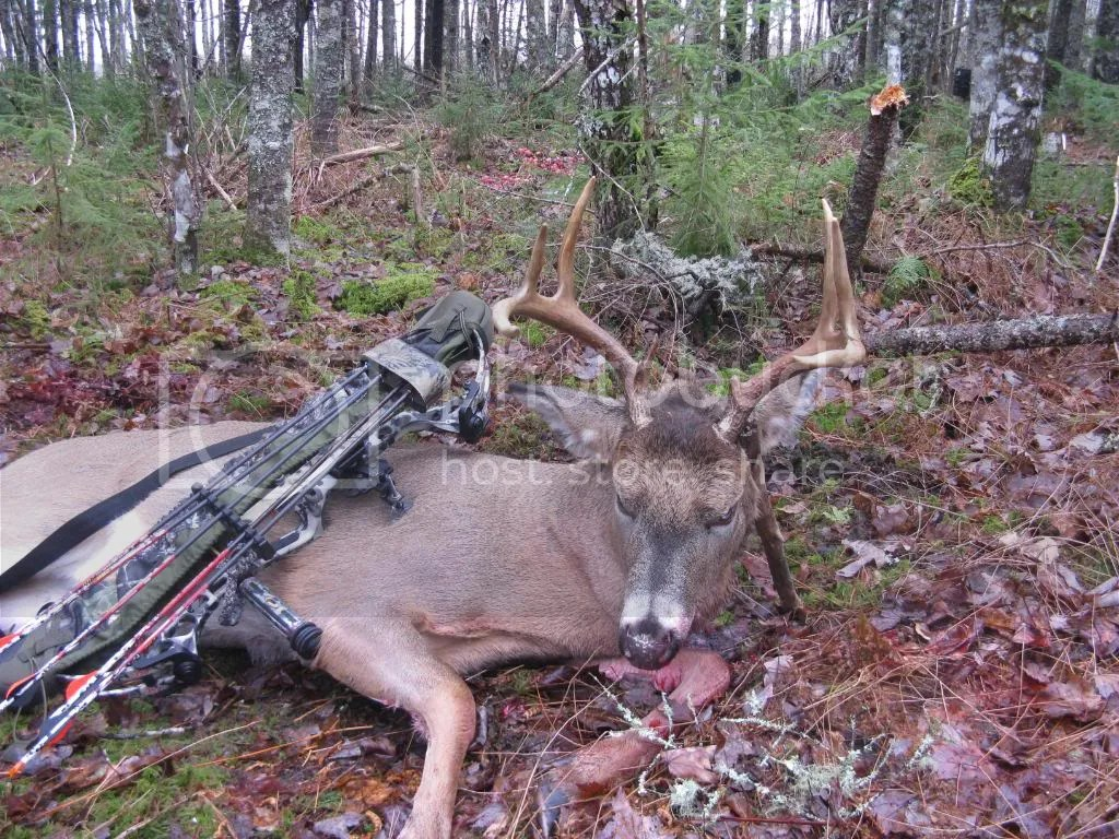 Image result for whitetail buck shot