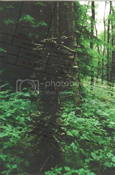A strange structure in a forest -- a post, around which twigs are placed to a height of about six feet