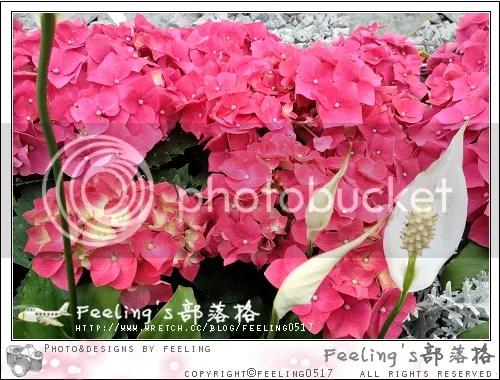 【展覽】銅鑼灣 維多利亞公園:二零一三年香港花卉展覽(花卉篇) @ 雪霜 × 生活小確幸 :: 痞客邦