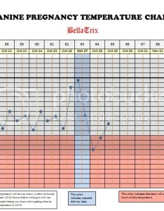 Image also canine pregnancy temperature chart strictly bull terriers rh bulliesofnc