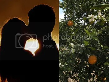 photo organic-citrus-groves-of-showcase-of-citrus-near-Orlando-Florida_edited-2_zps3ea92438.jpg