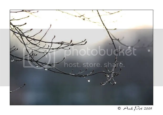 Log6-1-09-3.jpg picture by Knatop