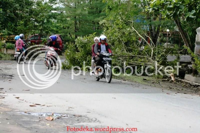 Salah satu pohon yang tumbang di depan FKIP UNMUL karena angin kencang disertai hujan tadi malam(8/02)