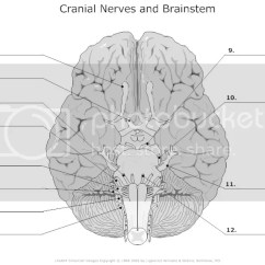 Eye Labeling Diagram Quiz Rascal 600t Wiring Label The Cranial Nerves By Bakerjasm Photo And Brainstem Unlabeled L Zps1ff70257 Jpg