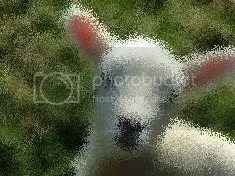 lamb blurred