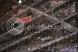 Thumbnail of Taunton Firepool Pumphouse - 403