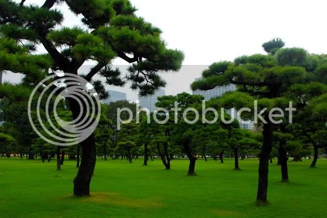 photo TYO142.jpg