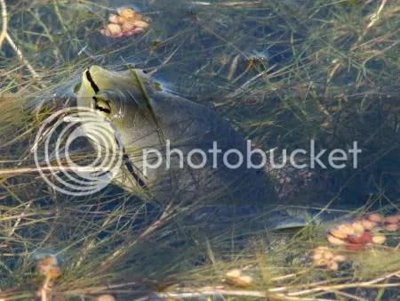 Bosque de los Constituyentes - Tortuga acuática