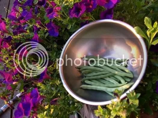 da beans