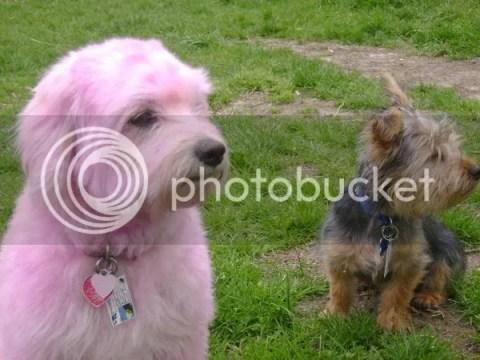 mybabes.jpg 2 cute dog's ever!!!!!, dua ekor najing yang cute, 2 dog cute, gambar anjing,