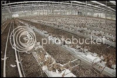 abandoned, architecture, belgique, belgium, decay, exploration, photography, urban, urban exploration, urbex, serre, greenhouse, plants, dried, out, flora