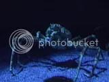 Valencia, Oceanográfico - Krabbe