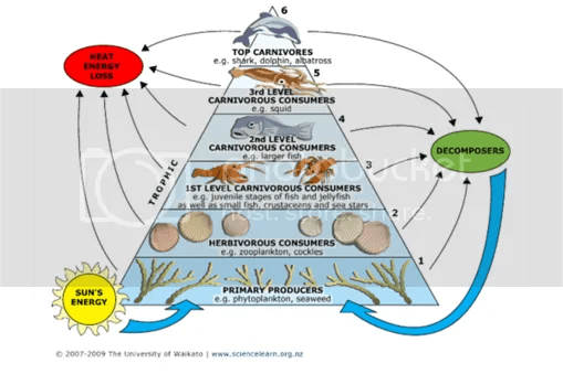 alligator food chain diagram 1997 f150 fuse box anthony marr: s.o.s. - ocean's 11th hour