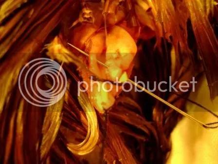 https://i0.wp.com/i187.photobucket.com/albums/x204/chicklady/crop3-1.jpg