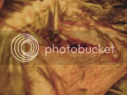 https://i0.wp.com/i187.photobucket.com/albums/x204/chicklady/crop3.jpg