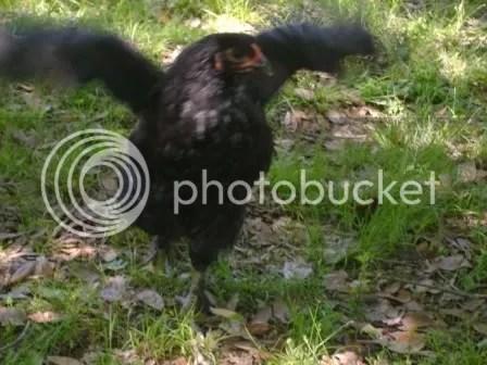 https://i0.wp.com/i187.photobucket.com/albums/x204/chicklady/eagle2.jpg