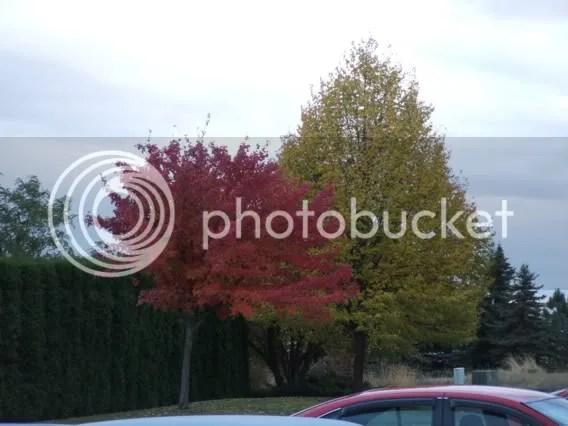 trees,autumn