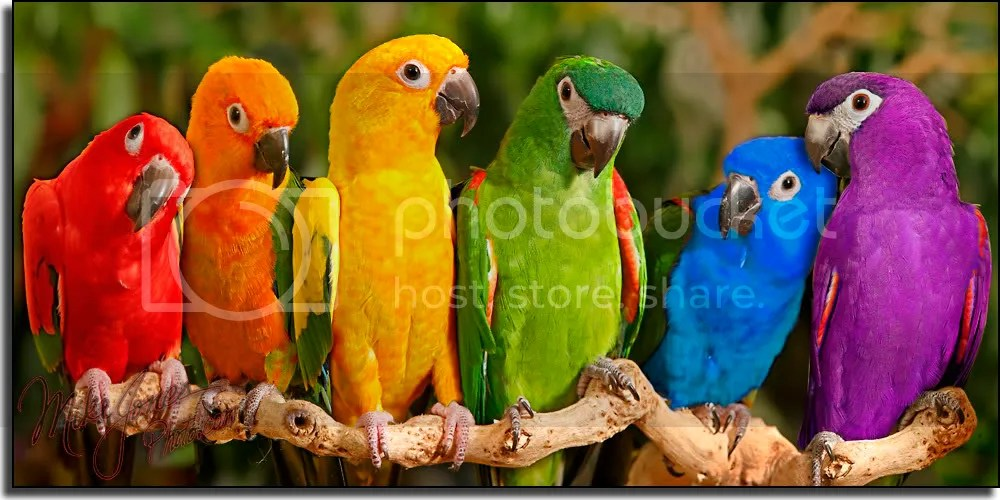 Colorful parrots Pictures, Images and Photos