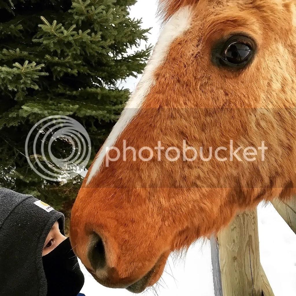 photo Horse WM_zpsgs2czza3.jpg