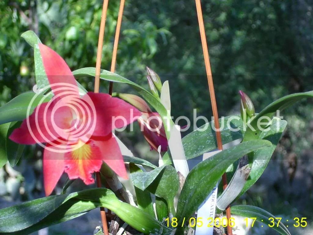 Orchidee e Compleanno  Forum di Giardinaggioit