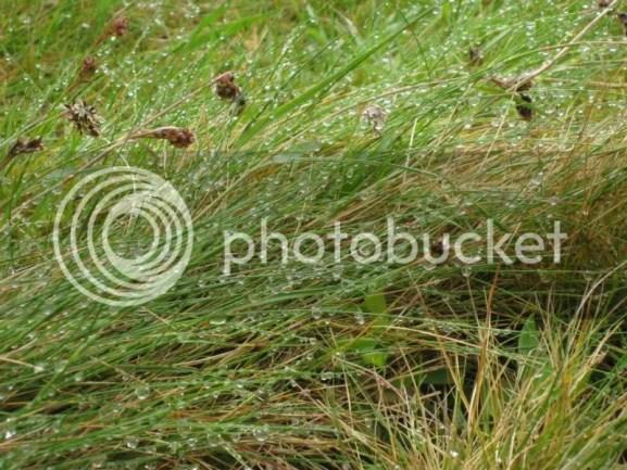 Raindrops on grass. photo 292275_10151064935126209_663099284_n.jpg