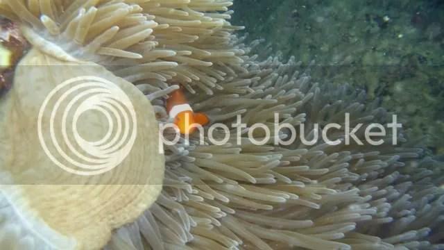 DOS PALMAS_underwater 2