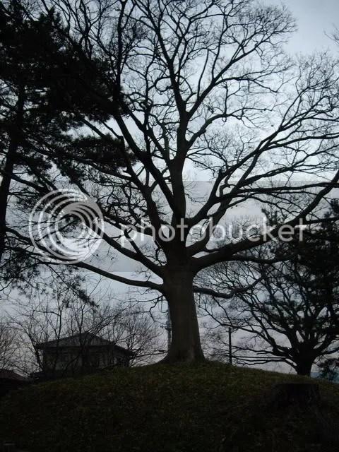 Arboreal Verdance askance