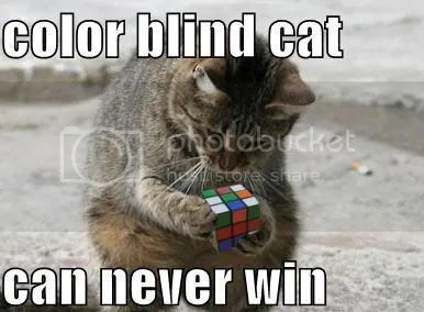 funny-pictures-color-blind-cat-rubi.jpg Color Blind Cat image by Sky_Shark_X2