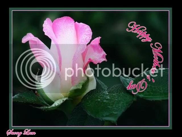 https://i0.wp.com/i195.photobucket.com/albums/z149/minh40/Ngay%20Cua%20Cha%20va%20Me/HappyMothersDayhoahong.jpg