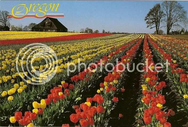 https://i0.wp.com/i195.photobucket.com/albums/z149/minh40/Portland/0008JPGtulipOR.jpg