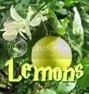 Lemon One-Shots   MMADfan's Blog & Fanfic Site
