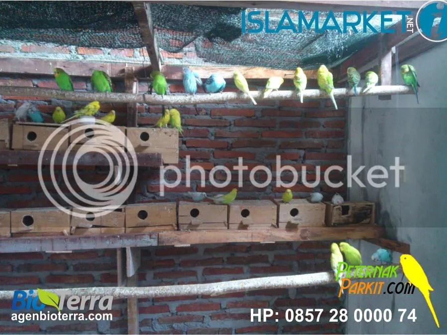 Pembeli ke 25 | Agus Ahmad Kurniawan - Bogor