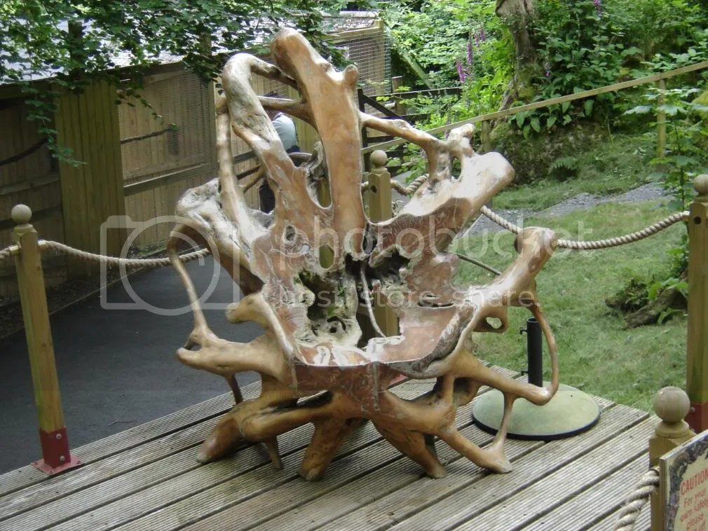 Chair carved from tree root