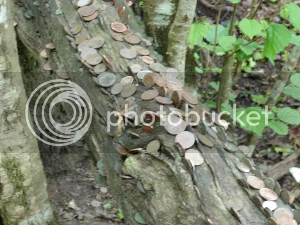The Money Tree close up