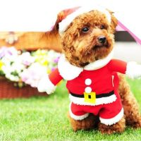 The best Christmas jumpers for dogs - Birmingham Live