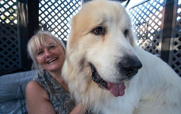 Susan and Boris Big Dog Perennial Sheepdog on Britain (Photo: Channel 4)