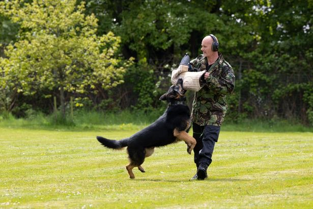 PC Steve Waters demonstrating how police dogs can be used to apprehend suspects (Image: Frankie Mills)