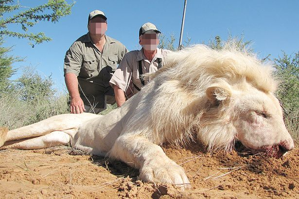 White lions face new extinction threat as trophy hunters offered cut-price deals